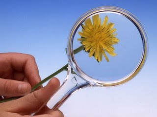 A photo with a flower under a magnifying glass
